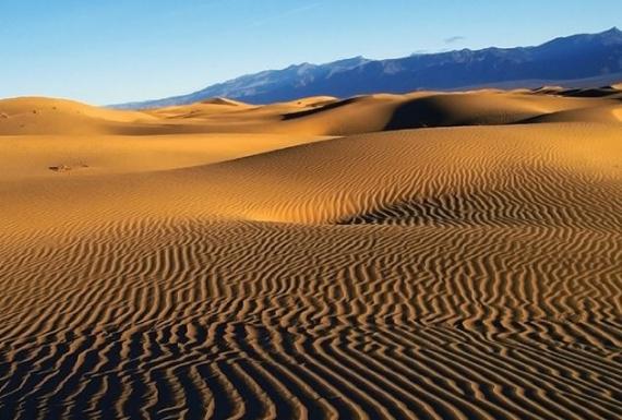 """Día de la tierra/""""Vida Endémica"""", un relato de la frontera y el desierto"""